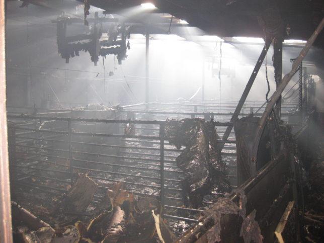 b_dinklage-schweinestallbrand-bild-din-06-16